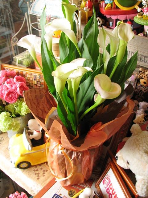 母の日 花鉢 カラー